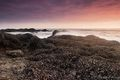 coastal, crescent bay, laguna beach, marine wildlife, mussels, nature, orange county, outdoors, outside, pacific coast, sea anemones, seascape, southern california, sunset, the oc, tide pool, tidepool