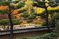 asian, autumn leaves, colors, fall color, flora, foliage, ginkgo biloba trees, japanese garden, los angeles county, outdoor, outside, san gabriel valley, san marino, seasonal, seasons, southern califo