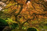 Peter Lik: Is Tree of Life Lik's Most Famous Photo?