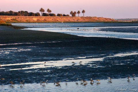 Bolsa Chica Ecological Reserve, Seal Beach, California, photo