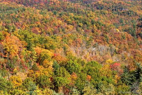 Appalachian Mountains, Daniel Boone National Forest, Natural Bridge State Resort Park, Red River Gorge Geological Area, appalachia, autumn leaves, colors, dogwood, fall foliage, forests, green, hemloc