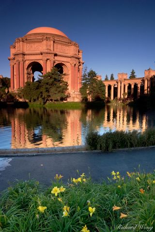 Beaux art architecture, California, Day lily, Marina District, Palace of Fine Arts, building, buildings, flower, flowers, lagoon, lagoons, lillies, pond, ponds, reflection, reflections, san francisco,