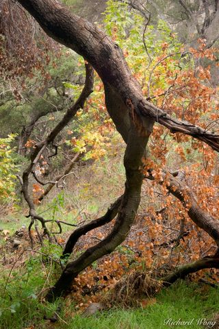 Angeles National Forest, Doggy style, Glendora, San Dimas Experimental Forest, San Gabriel Mountains, autumn leaves, branch, branches, cycle of life, dead, death, decay, dying, erotic, eroticism, fall