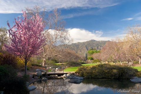 Arcadia, Los Angeles County Arboretum, San Gabriel Mountains bloom, San Gabriel Valley, San Gabriels, blooming trees, garden, gardens, landscape, landscapes, nature, reflections, southern california,