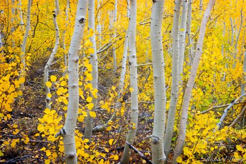California, aspen trees, autumn, bishop creek canyon, colors, creeks, eastern sierra, fall foliage, forests, golden, inyo national forest, leaves, nature, orange, red, sierra nevadas, south fork bisho
