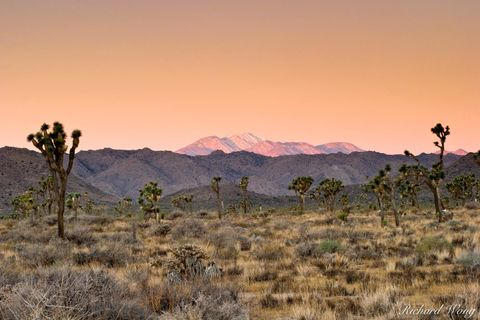 Joshua Tree National Park, Mojave Desert, amazing, arid, backcountry, dawn, desert, deserts, distance, distant, dry, earth shadow, freedom, horizontal, inspiration, isolated, joshua trees, landscape,