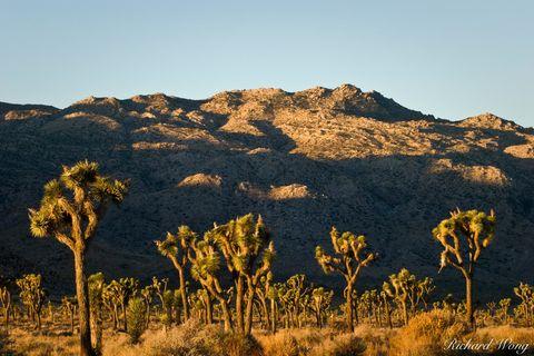 Joshua Tree National Park, Mojave Desert, amazing, arid, backcountry, desert, deserts, distance, distant, dry, freedom, horizontal, inspiration, isolated, joshua trees, landscape, mountains, nature, o