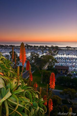Pacific Ocean, aloe vera, boats, coastal, coastline, coasts, dana point harbor, flower, house boat, landscape, north america, orange county, red flowers, scenic, southern california, sunset, sunsets,