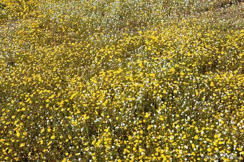 bloom, blooming, blooms, blossom, blossoming, blossoms, flower, flowers, hill, hills, hillside, hillsides, lake elsinore, landscape, landscapes, mountain, mountains, riverside county, scenery, scenic