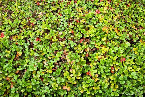 Green Roof Vegetation on California Academy of Sciences Building / Golden Gate Park, San Francisco, California, photo