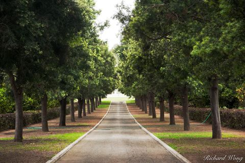 Los Angeles County, flora, garden, green, huntington botanical gardens, mausoleum, nature, outdoor, outdoors, outside, road, roads, san marino, southern california, travel, tree-lined road, trees, uni