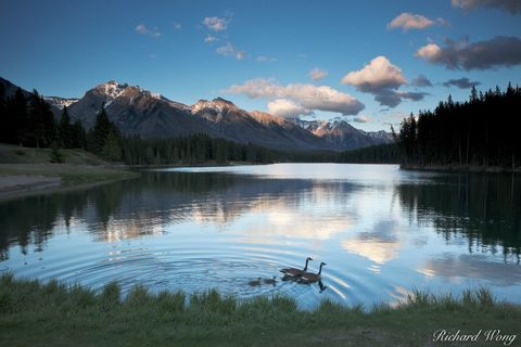 alberta, babies, banff, banff national park, birds, canada, canada goose, canadian geese, canadian rockies, chicks, clouds, color image, dad, evening, fairholme range, family, glacial lake, horizontal