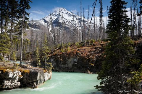 b.c, british columbia, burn area, burned forest, canada, canadian rockies, color image, dead trees, fire, forests, horizontal format, kootenay national park, landscape photography, marble canyon, natu