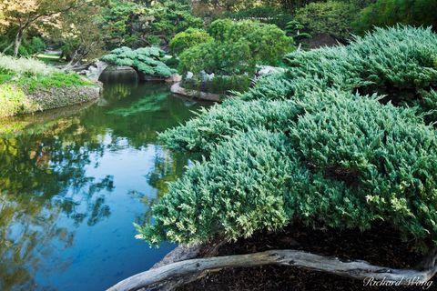 Los Angeles County, San Gabriel Valley, bushes, exterior, flora, garden, huntington botanical gardens, japanese garden, landscaping, nature, outdoor, outdoors, outside, pond, reflection, san marino, s