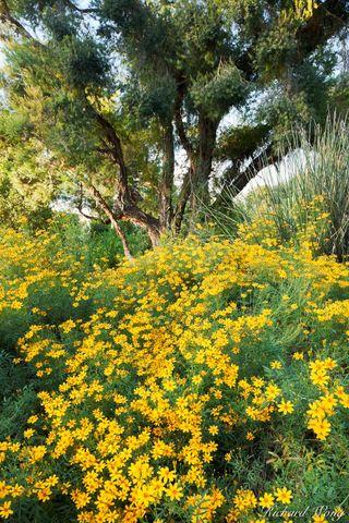 California, Los Angeles County, San Gabriel Valley, australian garden, bloom, blooming, blooms, blossom, bush, exterior, flora, flowering, garden, huntington botanical gardens, landscaping, nature, ou