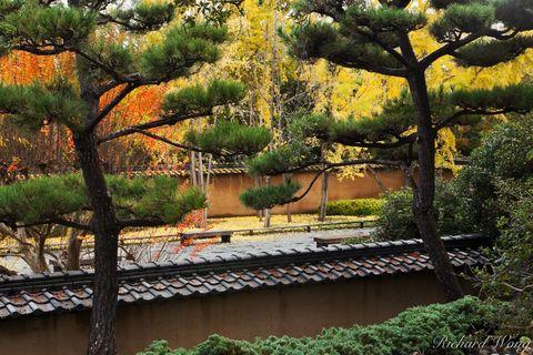 Fall Color in Japanese Garden at The Huntington, San Marino, California, photo