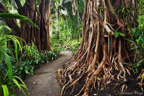Los Angeles County, San Gabriel Valley, forested, forests, jungle garden, outdoor, outside, path, pathway, roots, san marino, seasonal, southern california, the huntington library and botanical garden