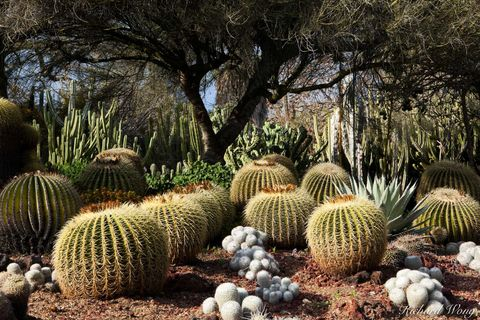 Barrel cactus, Los Angeles County, San Gabriel Valley, agave, cacti, desert garden, drought tolerant plants, exterior, flora, garden, huntington botanical gardens, landscaping, nature, outdoor, outdoo