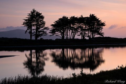 city, crissy field, dawn, ggnra, golden gate national recreation area, landscape, marsh, monterey cypress trees, morning, nature, northern california, outdoors, outside, pond, reflection, san francisc