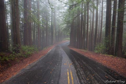 asphalt, coast redwood trees, fog, foggy, infrastructure, landscape, manmade, marin county, moody, mount tamalpais state park, mysterious, nature, northern california, outdoors, outside, paved, paveme