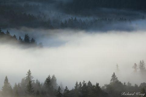 Sunrise Fog Over Mt. Tamalpais Watershed, Marin County, California, photo