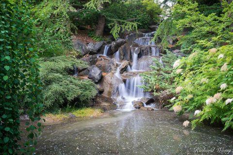 b.c, bc, british columbia, canada, fern, flora, north america, outdoors, outside, pond, vancouver, vandusen botanical garden, water, waterfall
