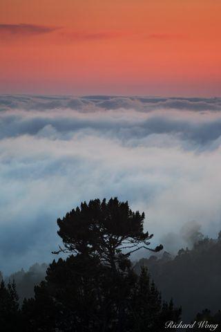 Tree in a Sea of Fog at Sunset, Berkeley, California, photo