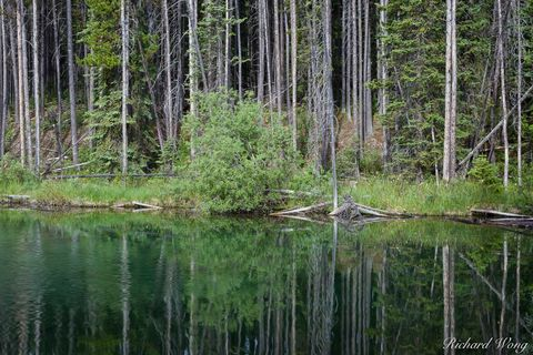 a.b, alberta, banff national park, canada, canadian rockies, forest, freshwater, herbert lake, icefields parkway, landscape, nature, north america, outdoors, outside, scenery, scenic, trees, water ref