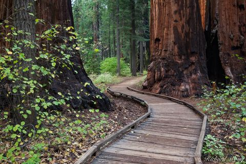 North Grove Trail, Calaveras Big Trees State Park, California, photo
