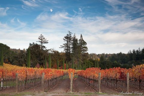 autumn leaves, boeschen vineyards, cabernet sauvignon, colorful, fall colors, grapevines, green, landscape, moon, napa county, napa valley, north america, northern california, orange, outdoors, outsid