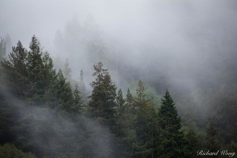 Foggy Forest in Berkeley Hills, Berkeley, California, photo