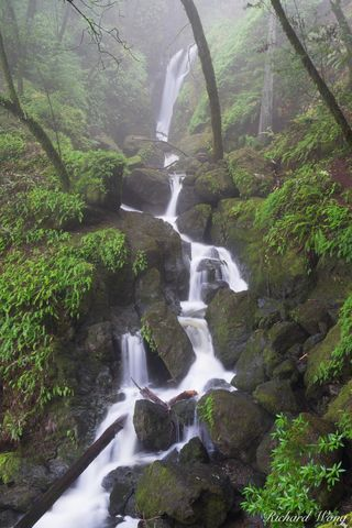 Cataract Falls in Fog / Mount Tamalpais Watershed, Marin County, California, photo