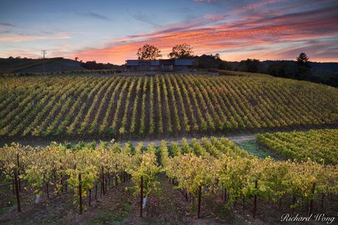 alpenglow, autumn leaves, fall color, healdsburg, landscape, macrostie vineyards, northern california, october, outdoors, outside, russian river valley ava, san francisco bay area, scenery, scenic, se