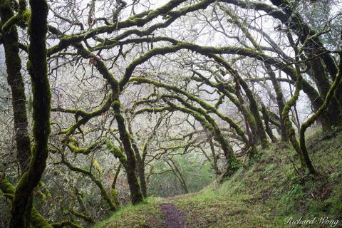 Tree-Lined Hiking Trail, Cascade Canyon Open Space Preserve, Marin County, California, photo