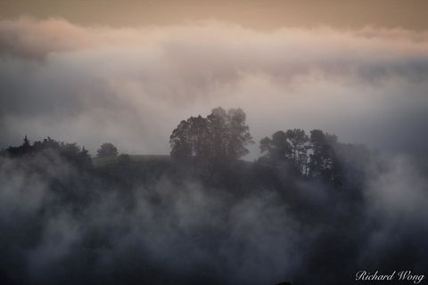 alameda county, berkeley hills, dusk, east bay, fog, foggy, fogscape, grizzly peak blvd, landscape, marine layer, northern california, outdoors, outside, san francisco bay, scenery, scenic, sunset, tr