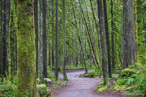 Capilano River Regional Park Hiking Trail, North Vancouver, B.C., Canada, photo