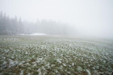 Snow Storm on Hurricane Ridge, Olympic National Park, Washington, photo