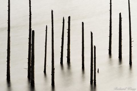 abstract, dead trees, kent lake, long exposure, marin county, marin municipal water district, mmwd, nature, north america, northern california, outdoors, outside, scenery, scenic, scenics, united stat