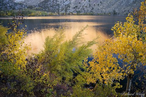 Convict Lake Fall Colors, Inyo National Forest, California, photo
