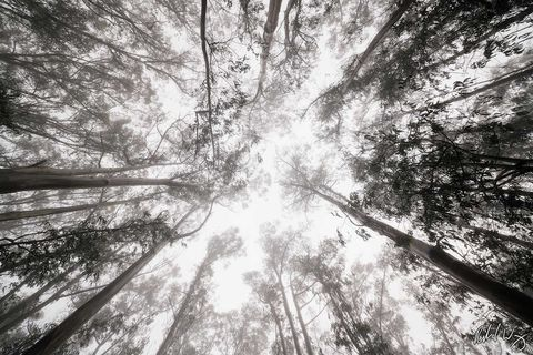 Cloud Forest Canopy