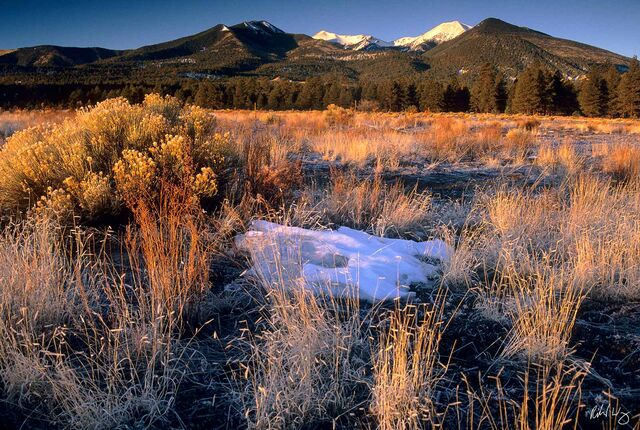 Bonito Meadow and San Francisco Peaks, Sunset Crater Volcano National Monument, Arizona