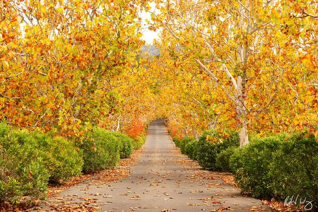 Oak Knoll Trees