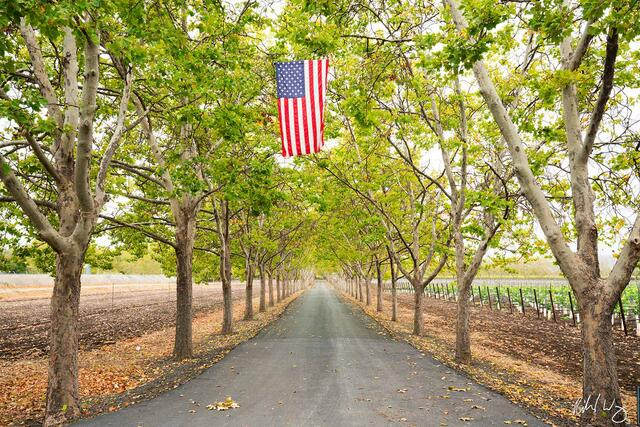 US Flag Hanging Above Tree-Lined Driveway, Napa Valley, California, photo