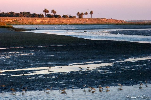 Bolsa Chica Ecological Reserve, Seal Beach, California, photo