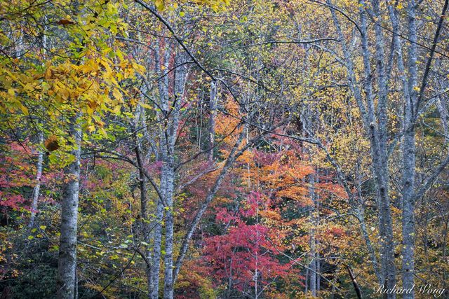 Fall Colors in the Red River Gorge Geological Area, Daniel Boone National Forest, Kentucky, photo