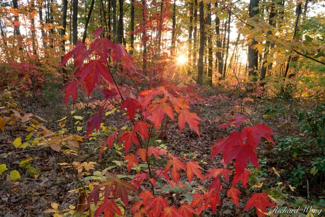 Sunset Through Fall Foliage on Gray's Arch Trail at the Red River Gorge Geological Area, Daniel Boone National Forest, Kentucky, photo