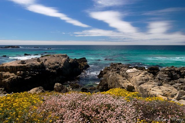 17 Mile Drive Coastal Wildflowers, Pebble Beach, California, photo