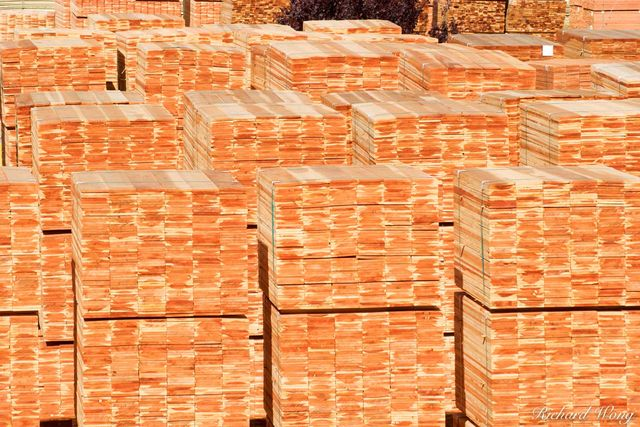 Stacks of Timber, Pacific Lumber Company Mill (PALCO), Scotia, California, photo