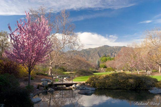 Los Angeles County Arboretum print