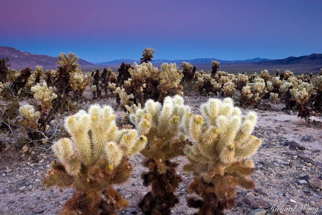 Joshua Tree Pictures